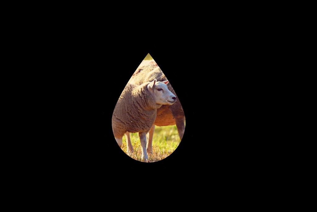 Illustration Jeu 3 les usages de l'eau